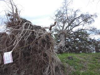 あのベンチの右隣の大木が台風で倒壊.jpg