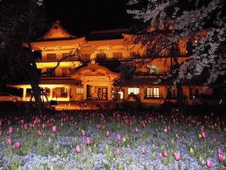 びわ湖大津館の桜とチューリップのライトアップ.jpg