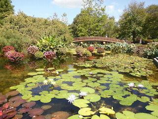 みずの森の絵画のような美しい池.jpg