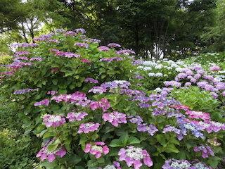 もりやま芦刈園.jpg