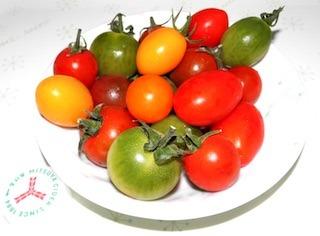 カラフルなフルーツミニトマト.jpg