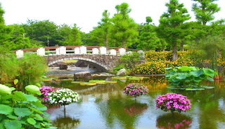 クロード・モネの絵画「睡蓮の池」のような花影の池の美しい景色.jpg