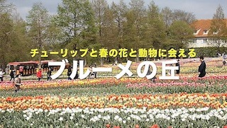 チューリップと春の花と動物に会えるブルーメの丘.jpg