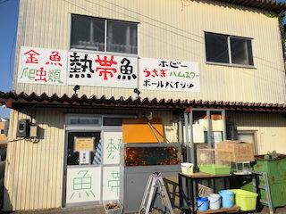 トロピカルフィッシュホビー(滋賀県彦根市の熱帯魚店).jpg