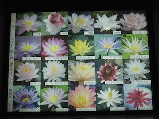 ハスの花とスイレンの花の図鑑.jpg