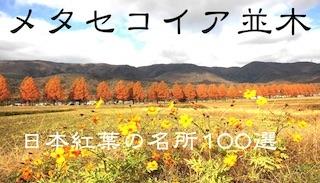 メタセコイア並木は日本紅葉の名所100選.jpg