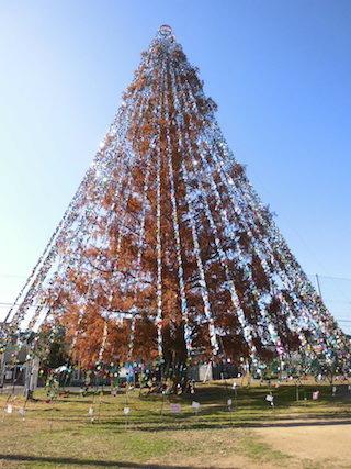 メタセコイヤのクリスマスツリー.jpg