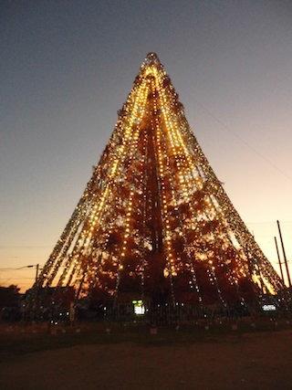 メタセコイヤの巨大なクリスマスツリー.jpg