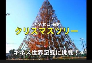 メタセコイヤの巨大なクリスマスツリー(ギネス世界記録に挑戦).jpg