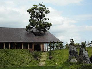 ラ・コリーナ 近江八幡の木の名前はクスノキ.jpg