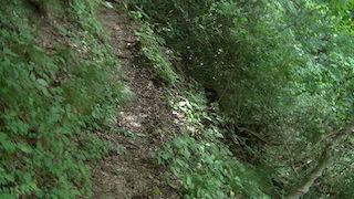 五色の滝に行く山道.jpg