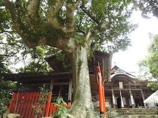 お釈迦様の手のひらをした木の枝.jpg