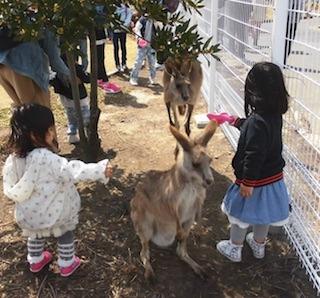 動物に触れ合う小さい女の子.jpg