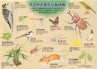 動物図鑑_昆虫図鑑_植物図鑑.jpg