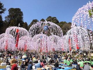 南山王祭ホイノボリと花見の宴会.jpg