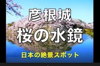 国宝彦根城の桜の水鏡.jpg