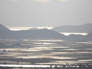 夕日が水田の水面を照らす夕景.jpg