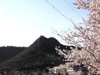 太郎坊山と箕作小学校と桜の木.jpg
