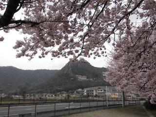 太郎坊山(太郎坊宮)と桜の景色.jpg