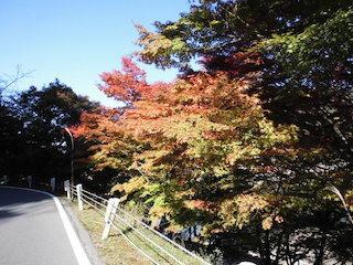 奥永源寺の紅葉スポット.jpg