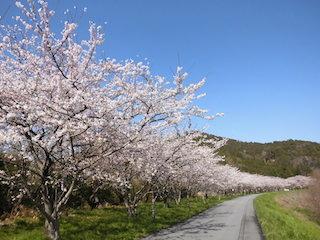 宇曽川沿いの桜並木と荒神山公園.jpg