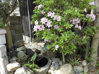 家の庭のに咲く春のピンク色の花