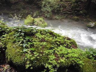 岩や石に生えている苔や植物.jpg