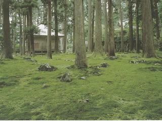 平泉寺白山神社の苔.jpg