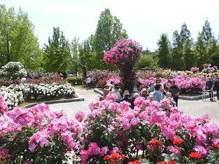 庄堺公園バラ園.jpg