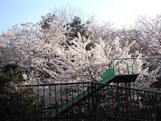 延命公園の桜スポット.jpg