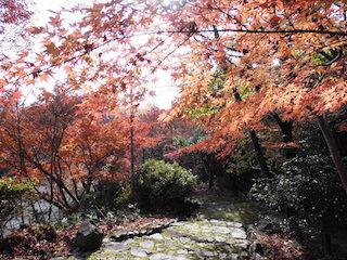 延命公園の紅葉は関西の穴場スポット.jpg