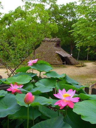 弥生の森歴史公園.jpg