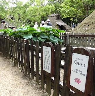 弥生の森歴史公園の大賀ハスのアクセス.jpg