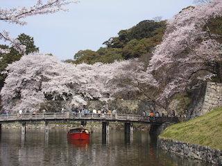 彦根城の桜と屋形船.jpg