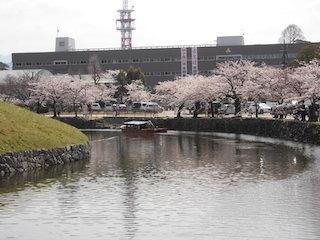 彦根東高校は彦根城のお堀の中にあります.jpg