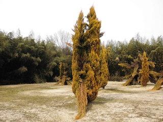 抱擁している植木の奇妙な風景.jpg