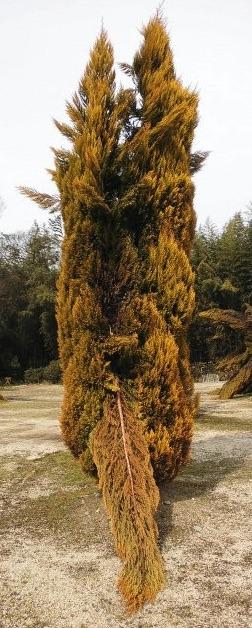 抱擁している芸術作品のような植木.jpg