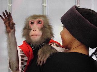 日本猿のショー.jpg