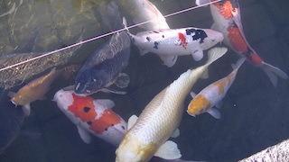 日本遺産の琵琶湖とその水辺景観の祈りと暮らしの水遺産.jpg