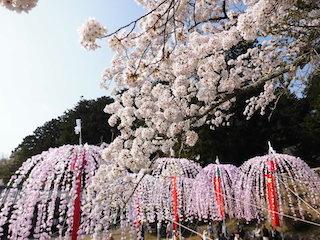 日枝神社(滋賀県日野町大窪)の南山王祭.jpg