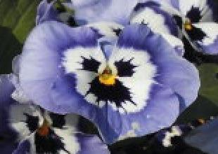 春に咲く紫色の花の名前.jpg