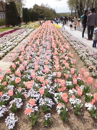 春のチューリップの花壇.jpg