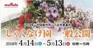 村田製作所八日市事業所のしゃくなげ園一般公開.jpg