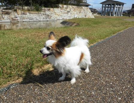 東近江市の愛犬が遊べる公園
