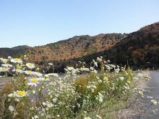 東近江市能登川の繖山の紅葉スポット.jpg