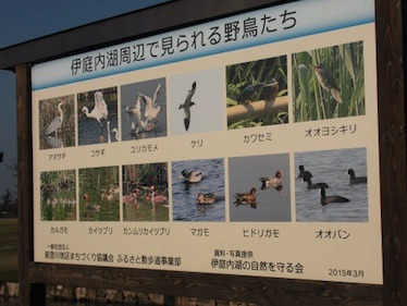 東近江市能登川地区の伊庭内湖の野鳥.jpg