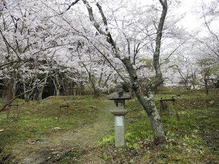 東近江市(能登川地区)満開の桜と灯篭
