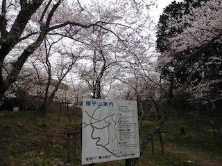 東近江市(能登川地区)猪子山の桜の名所