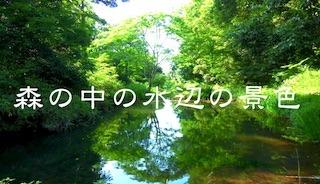 森の中の水辺の日本の絶景.jpg