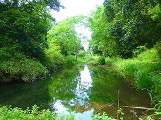 森の中の水辺の景色.jpg